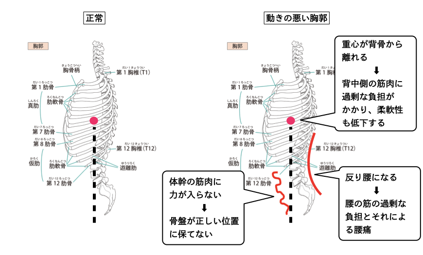 動きの悪い胸郭について